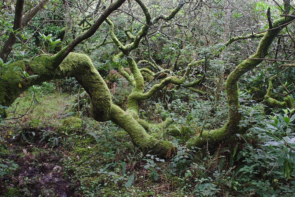 wooly limbs 2